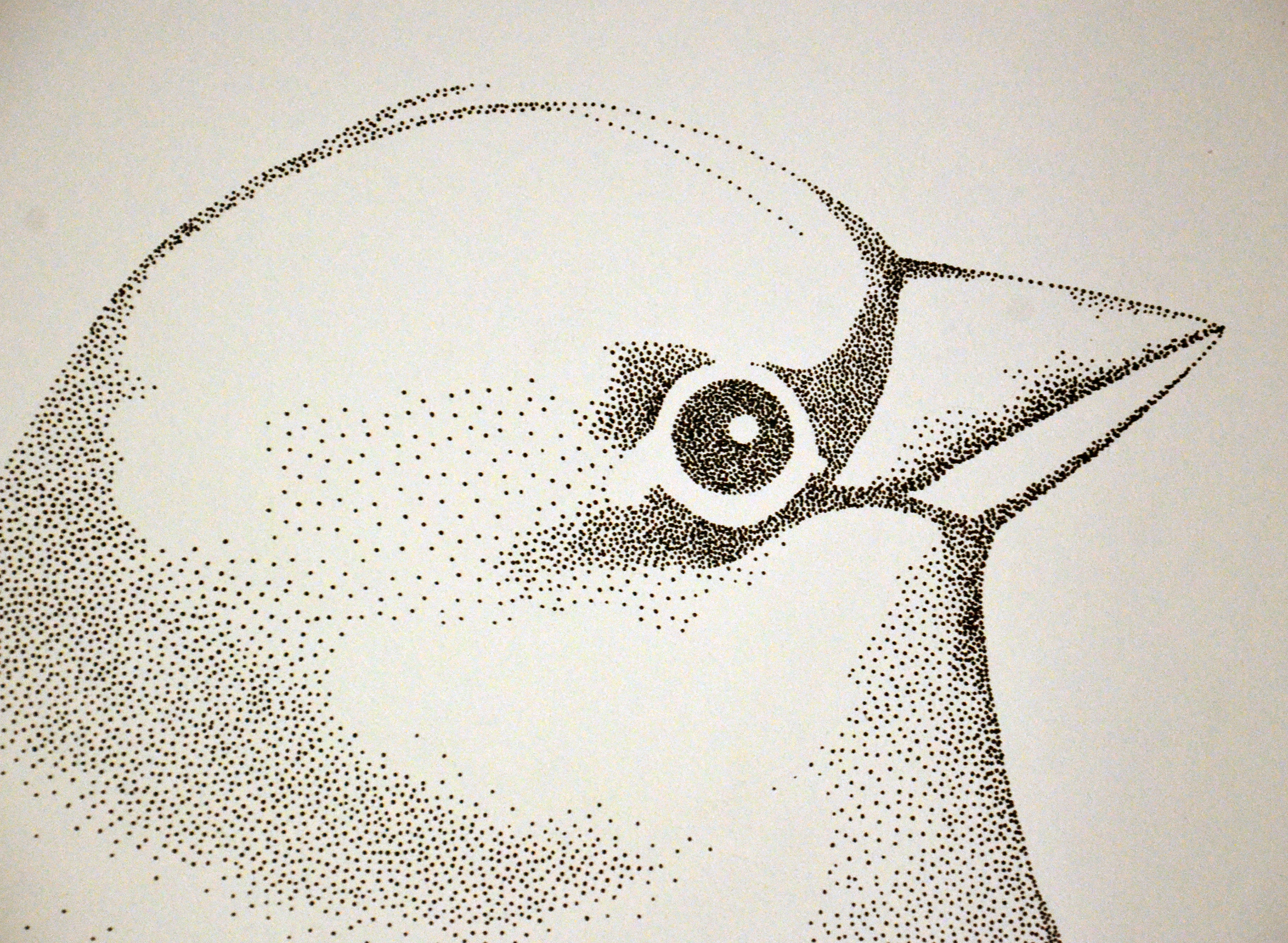 bird head detail